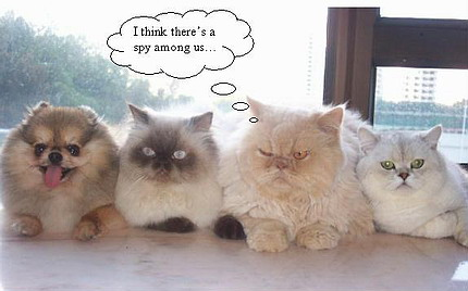 funny-cute-cats-1.jpg