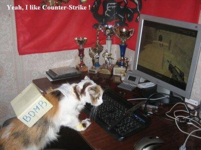 cat_terrorist.jpg