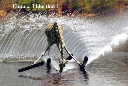 giraffe_waterski.jpg