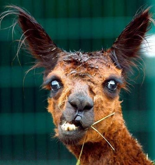 Fun Pictures Of Animals