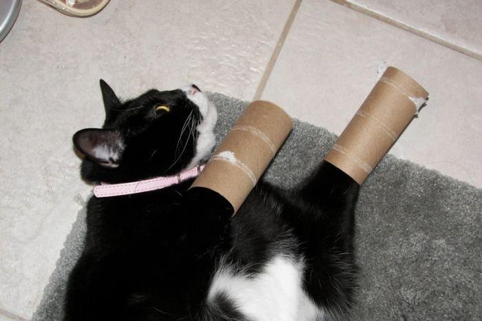 funny-cat-img.jpg